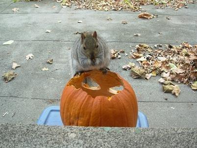 Taber à Halloween